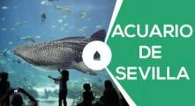 ¡Visita al acuario de Sevilla!